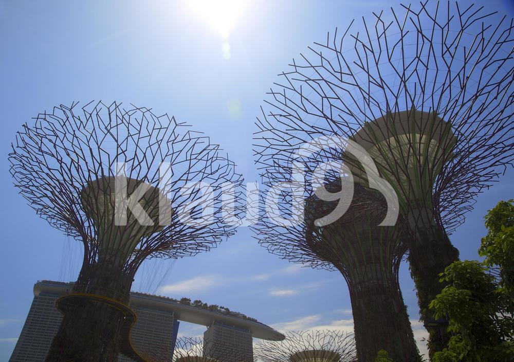 daytime view of supertrees in Singapore