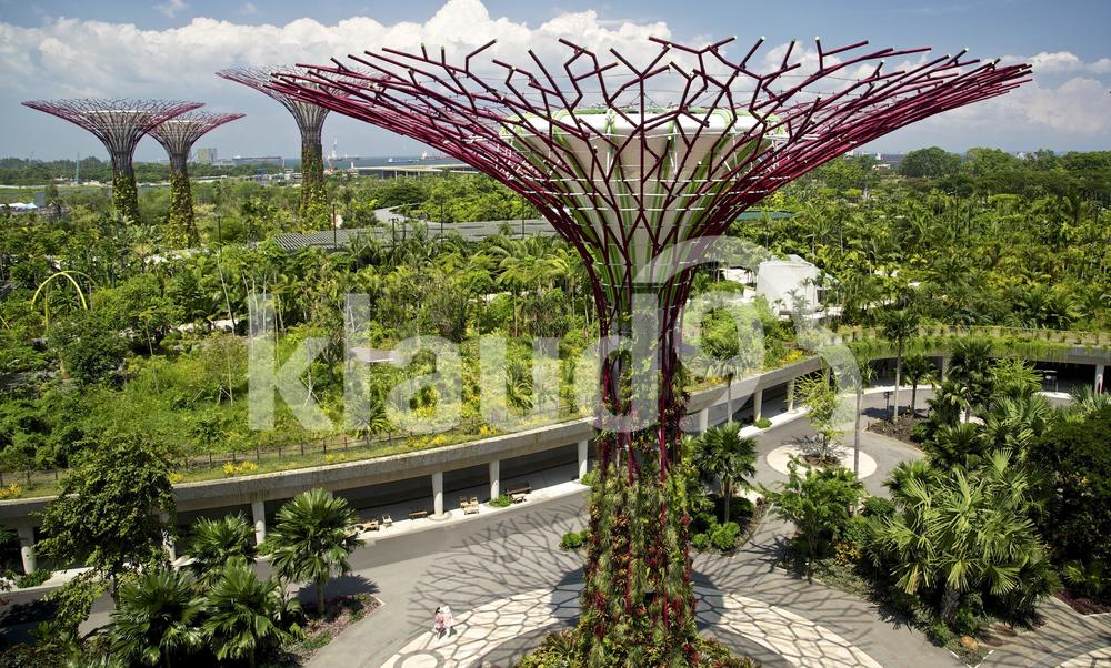 Supertree view from skywalk Gardens by the bay singapore