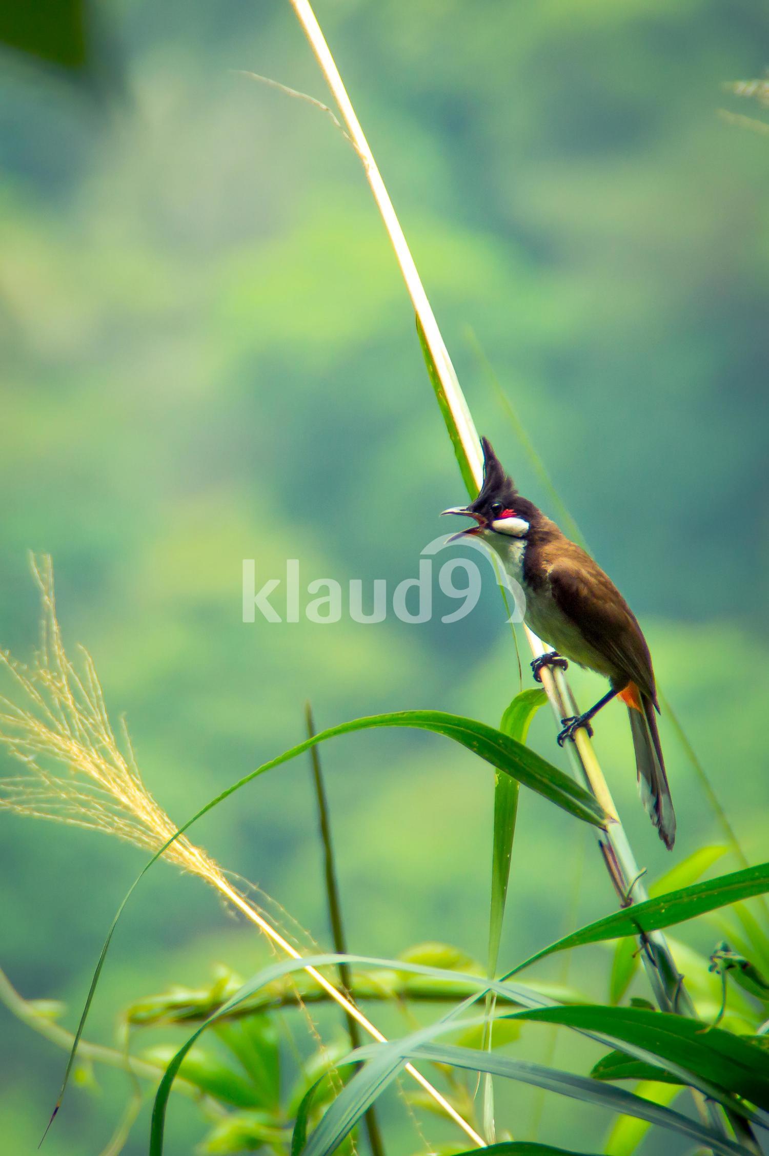 Bird enjoying its freedom