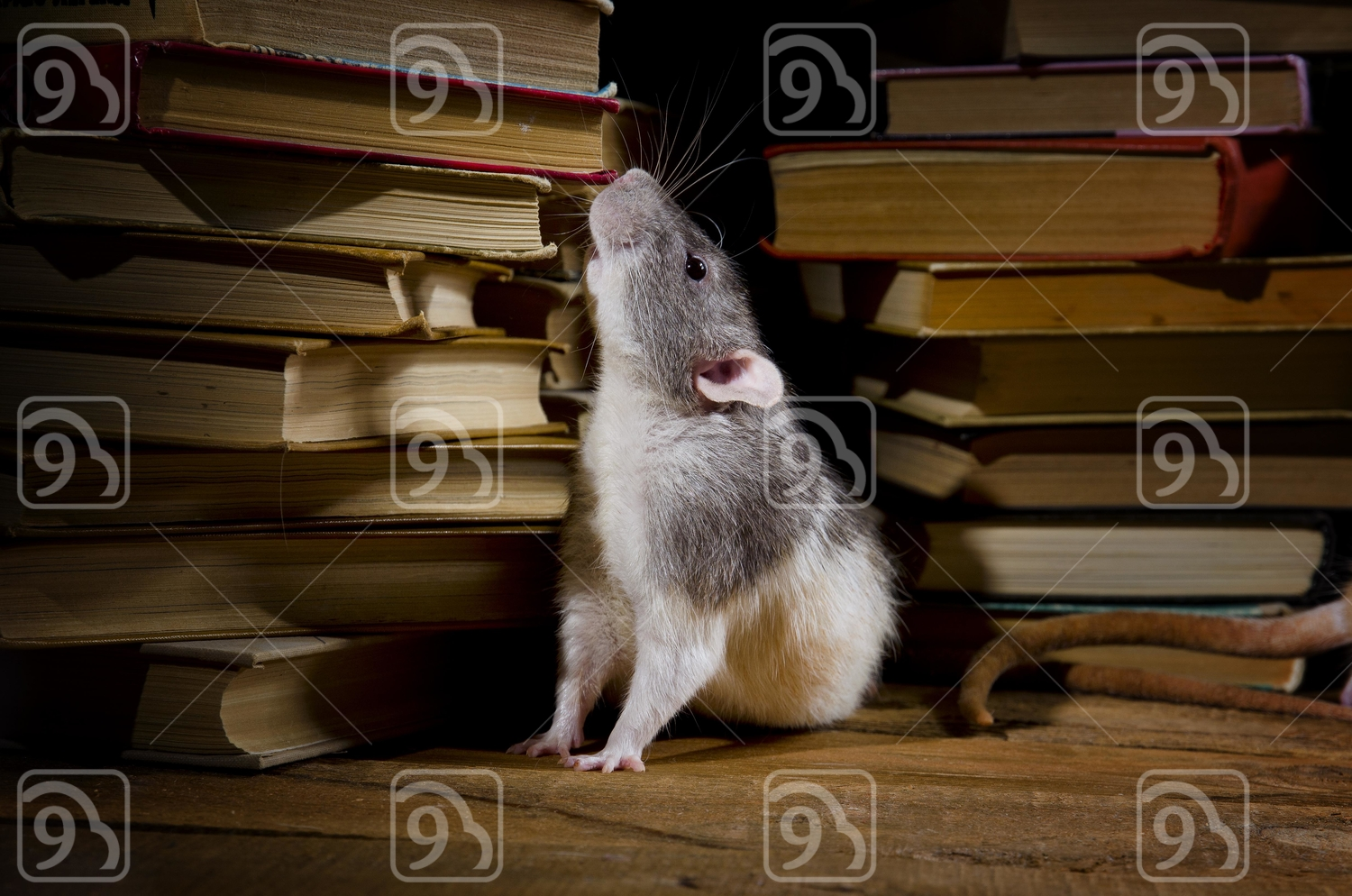 Rat scurrying around old books