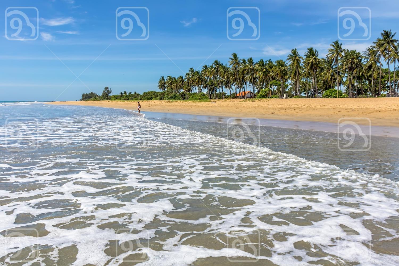 Palm on the tropical coast of the Indian Ocean. Sri Lanka