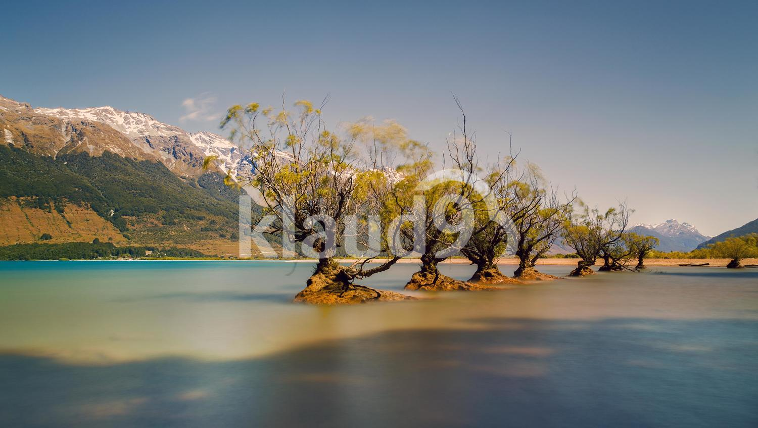 The old willows on the edge of Lake Wakatipu, Glenorchy ...
