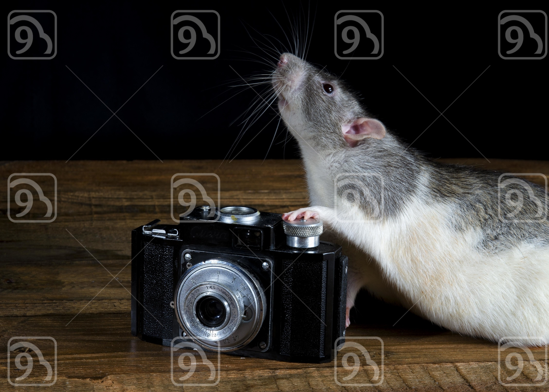 Grey Rat the photographer.