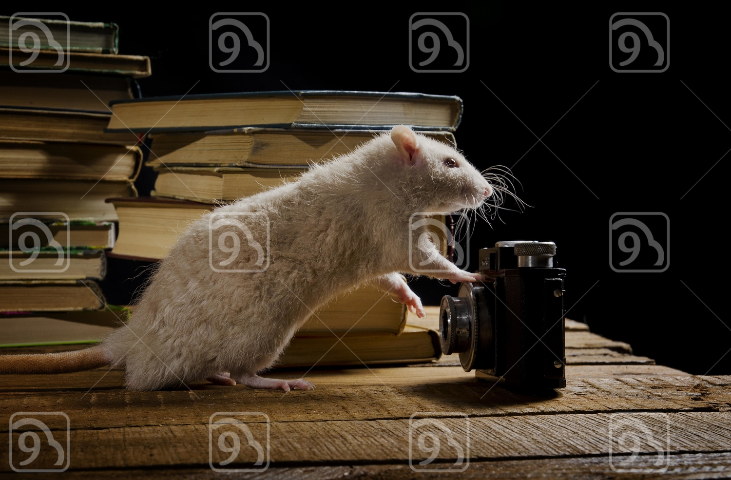 Wise White Rat in the Library