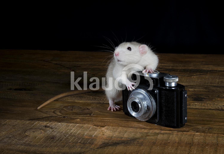 White Rat and Camera