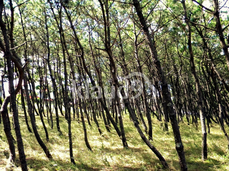 Slanted Forest