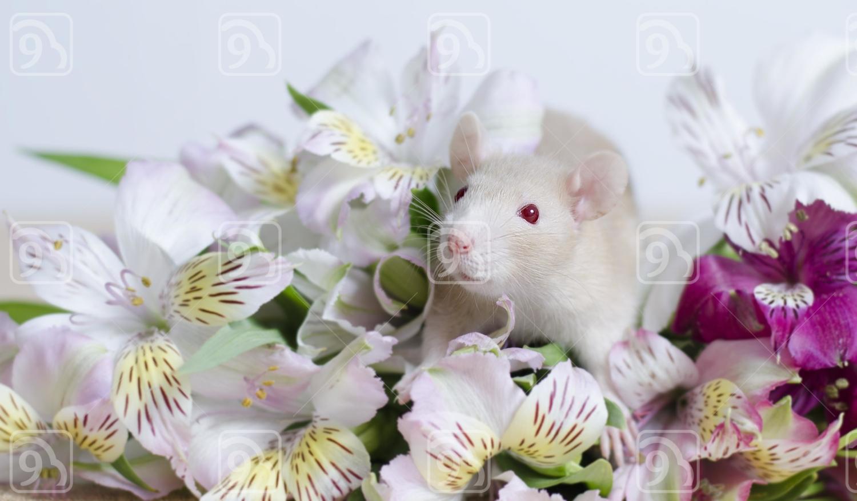 Rat hiding in flowers.