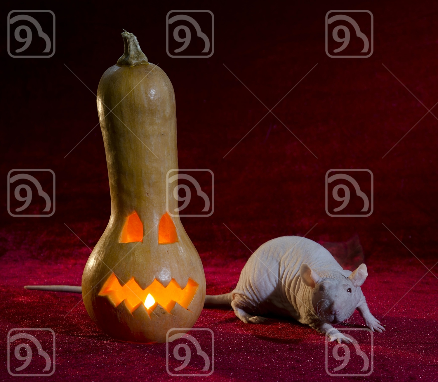 Jack-o'-lantern and Grey rat scurrying around.