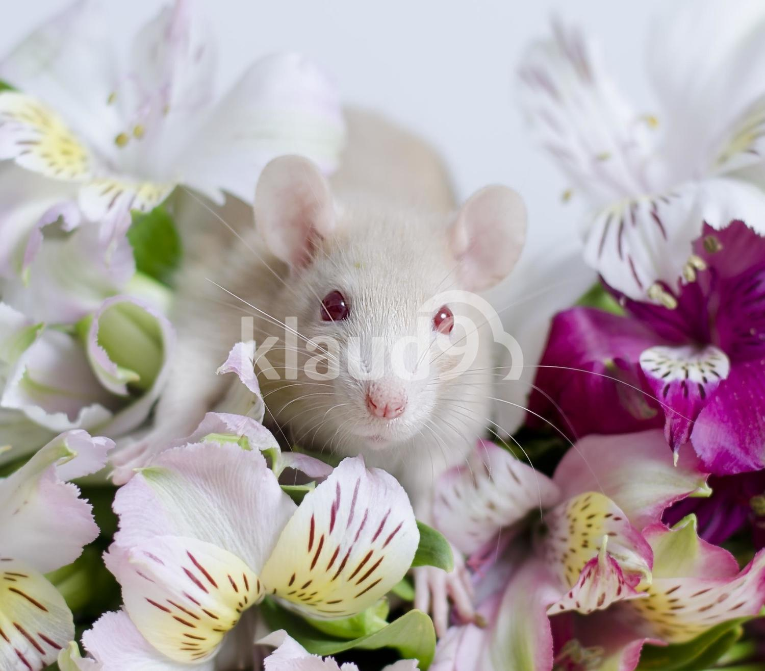 Rat in flowers.