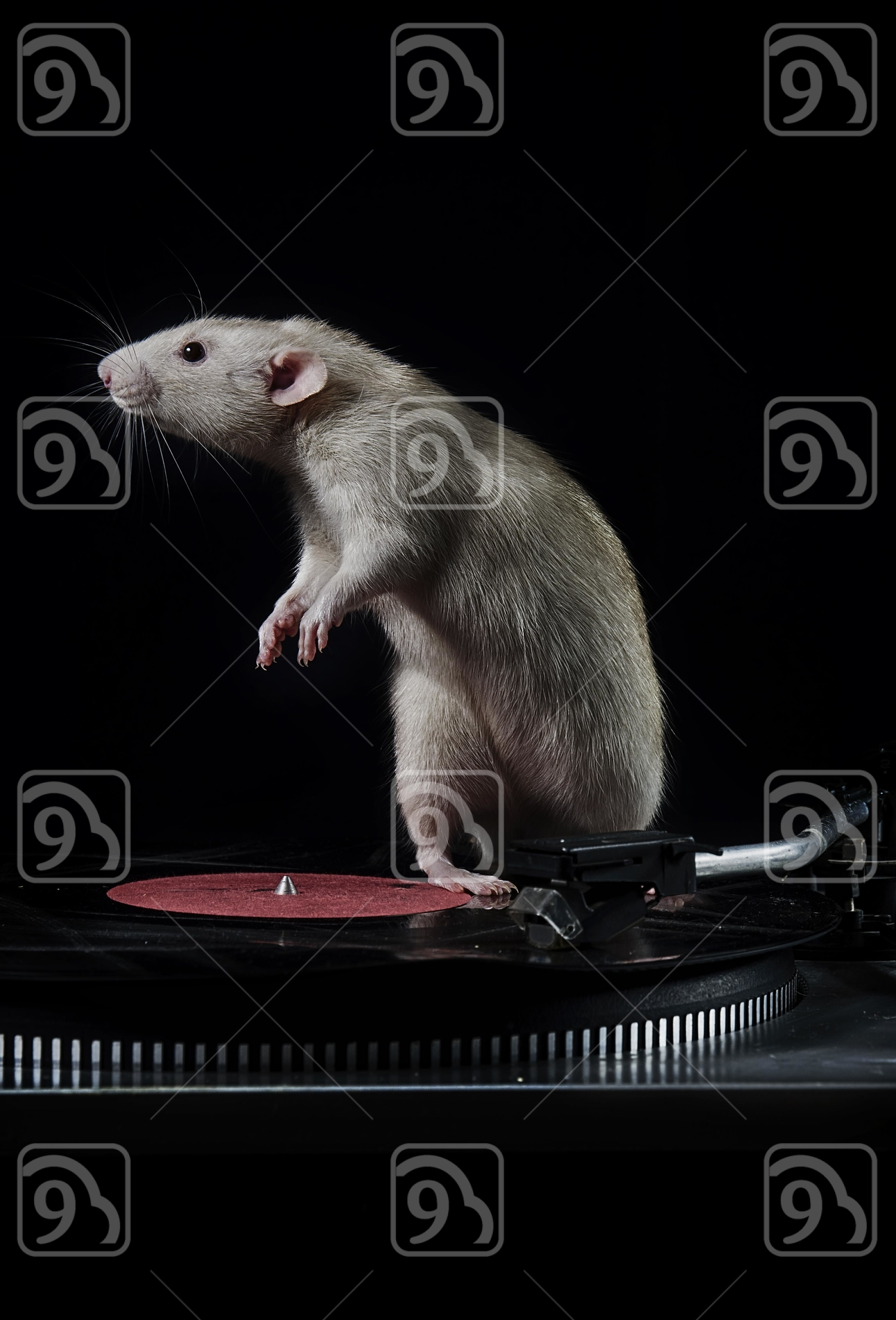 Rats and vinyl player.