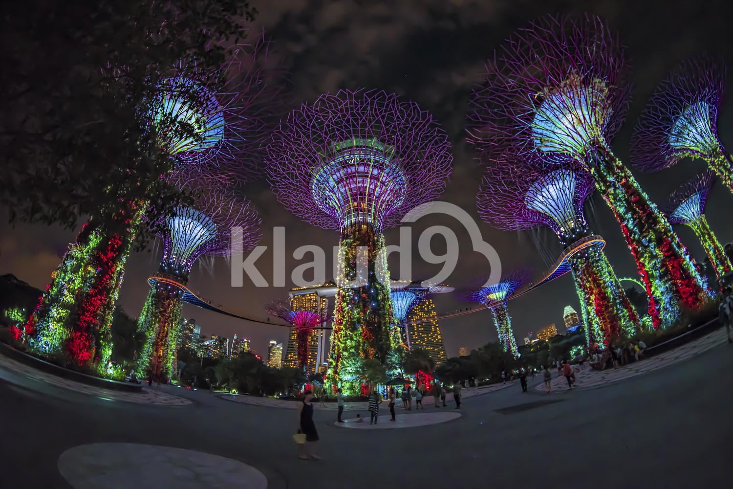 Supertrees @ Garden by the Bay