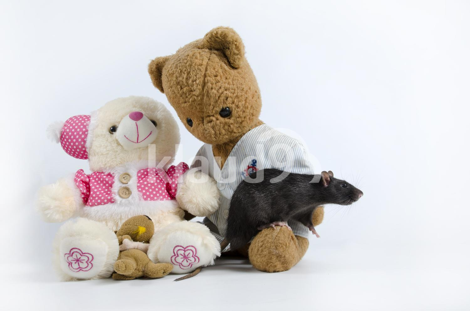 Black rat and soft toys