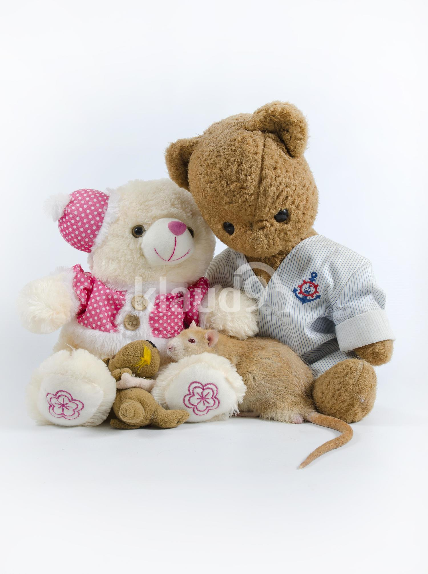 Cute brown mouse with soft toys