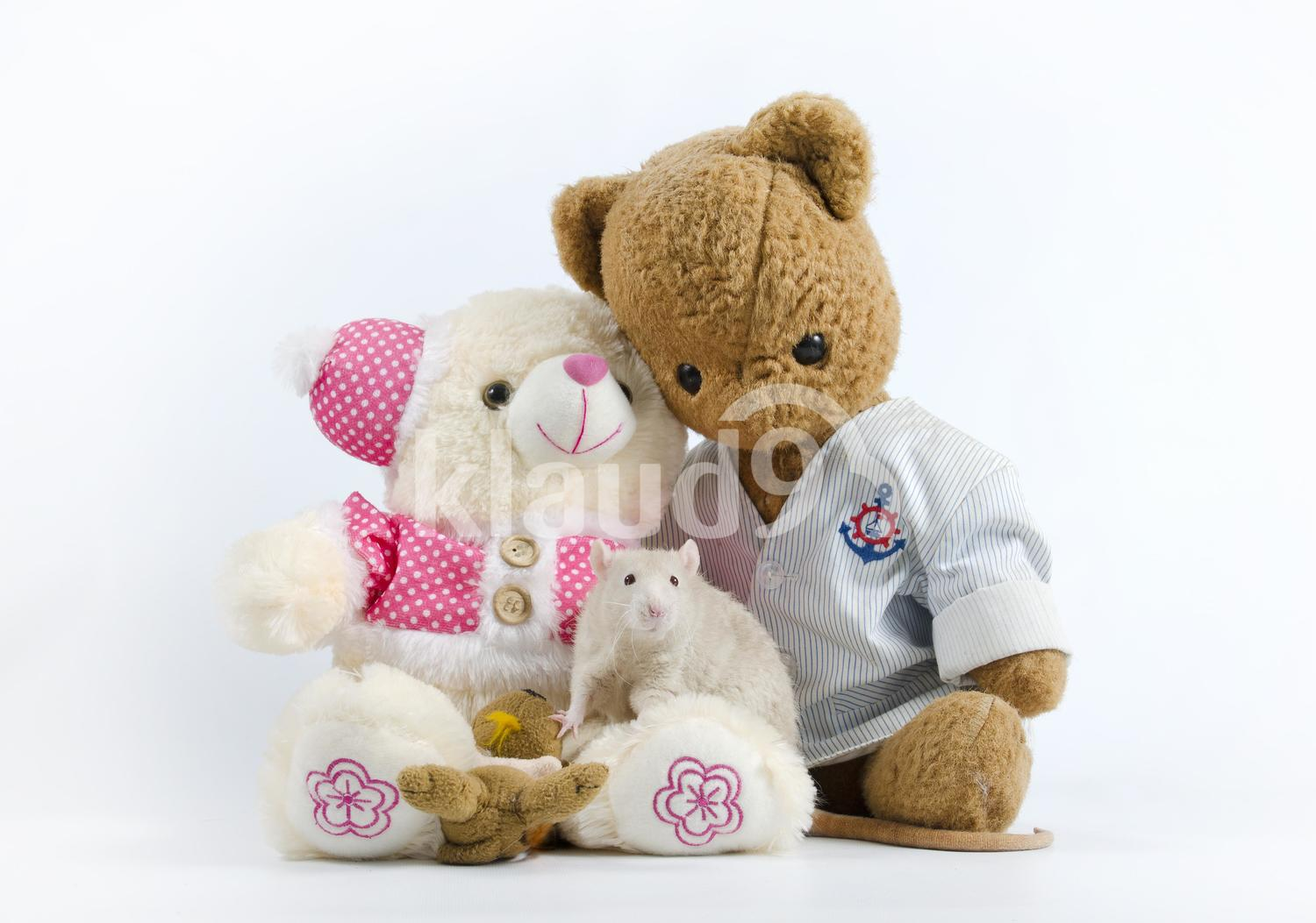 Cute white rat and soft toys