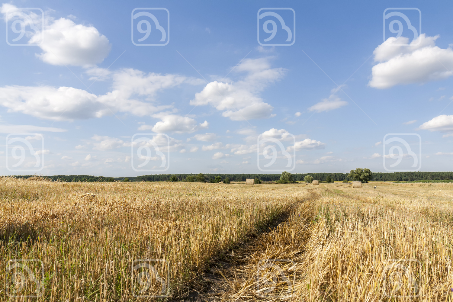 Straw bales in fields farmland with blue cloudy sky