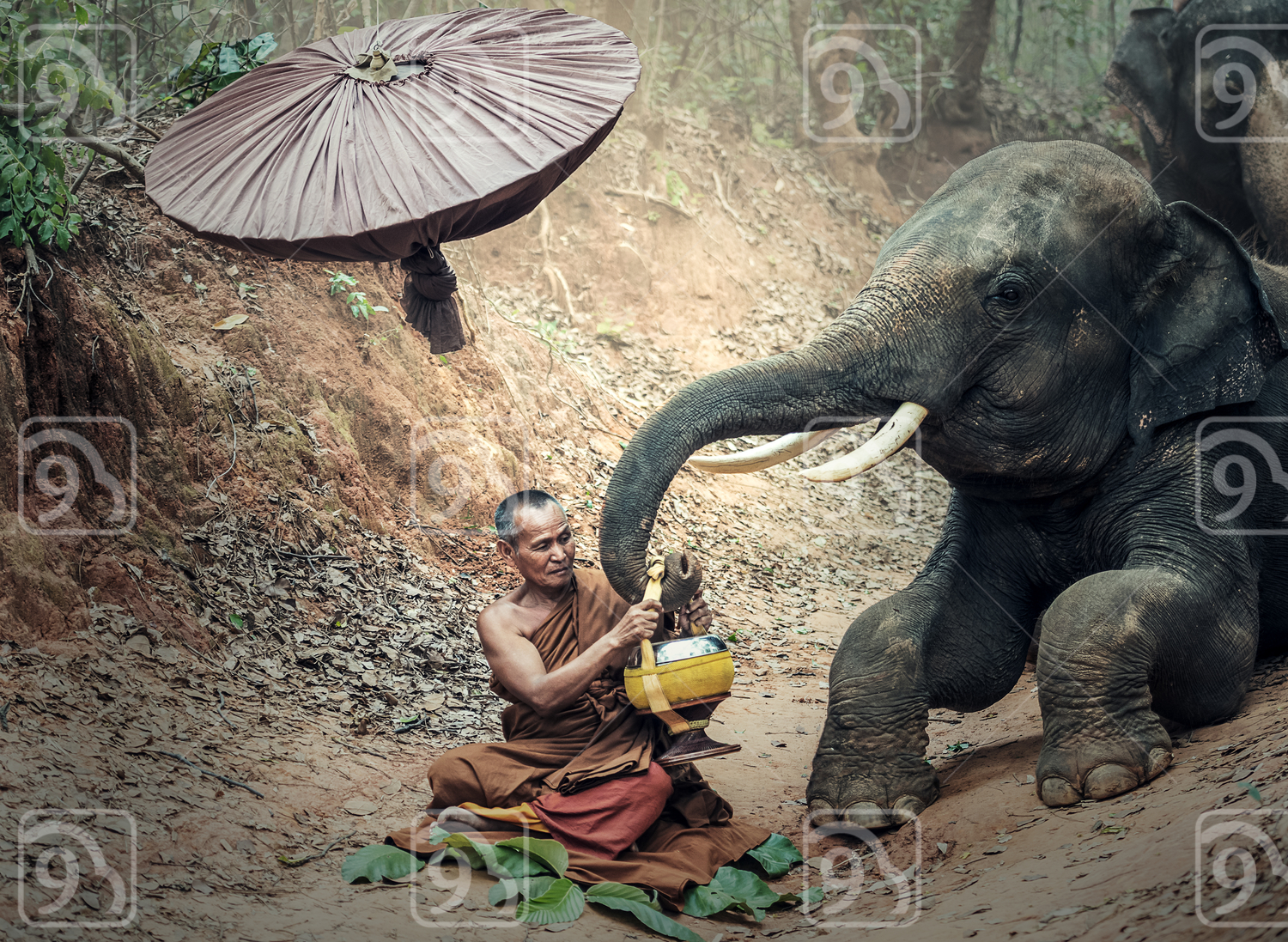 Monk in the jungle with elephant