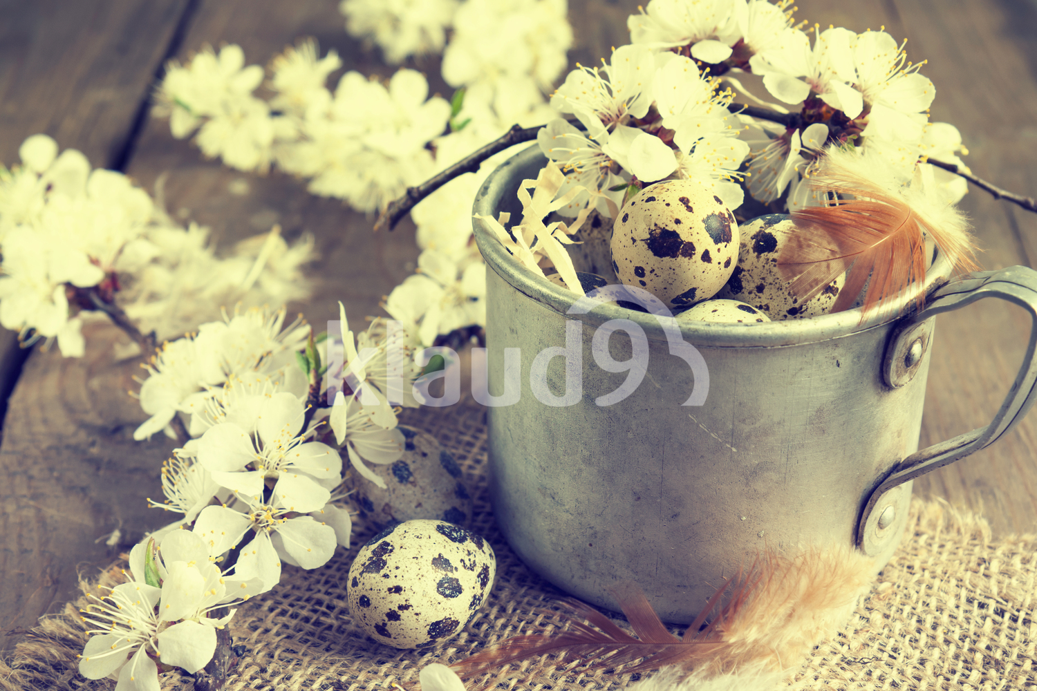 Quail eggs, branch of apricot blossom and feather
