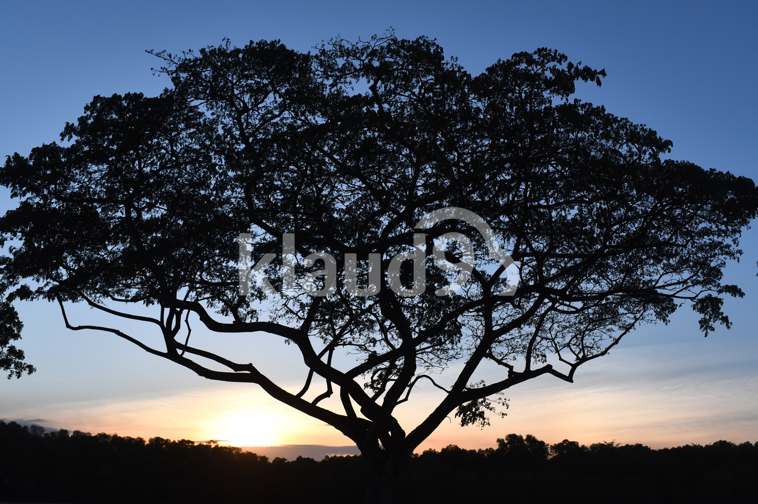Tree in sunset silhouette