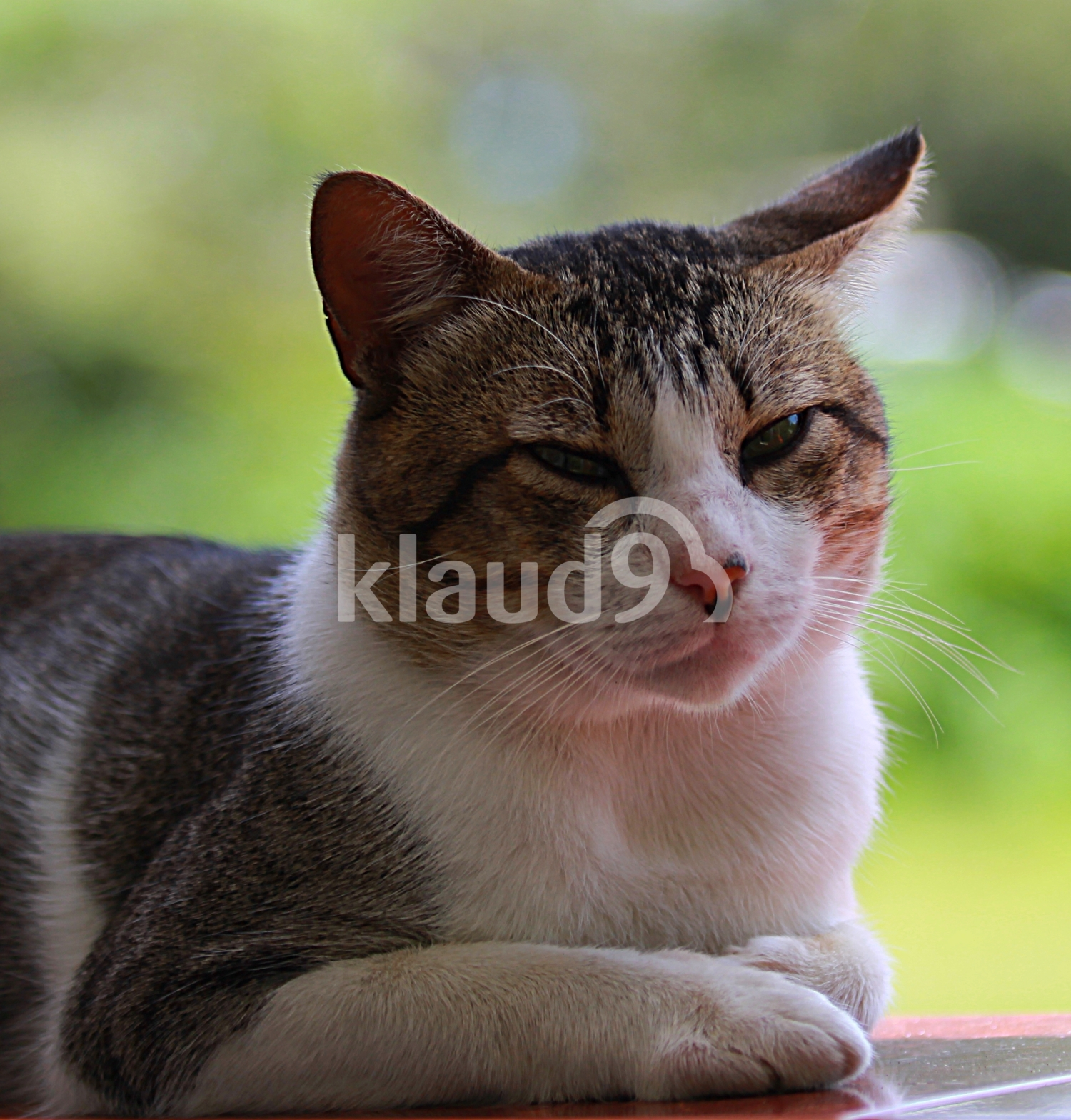 Cat ll