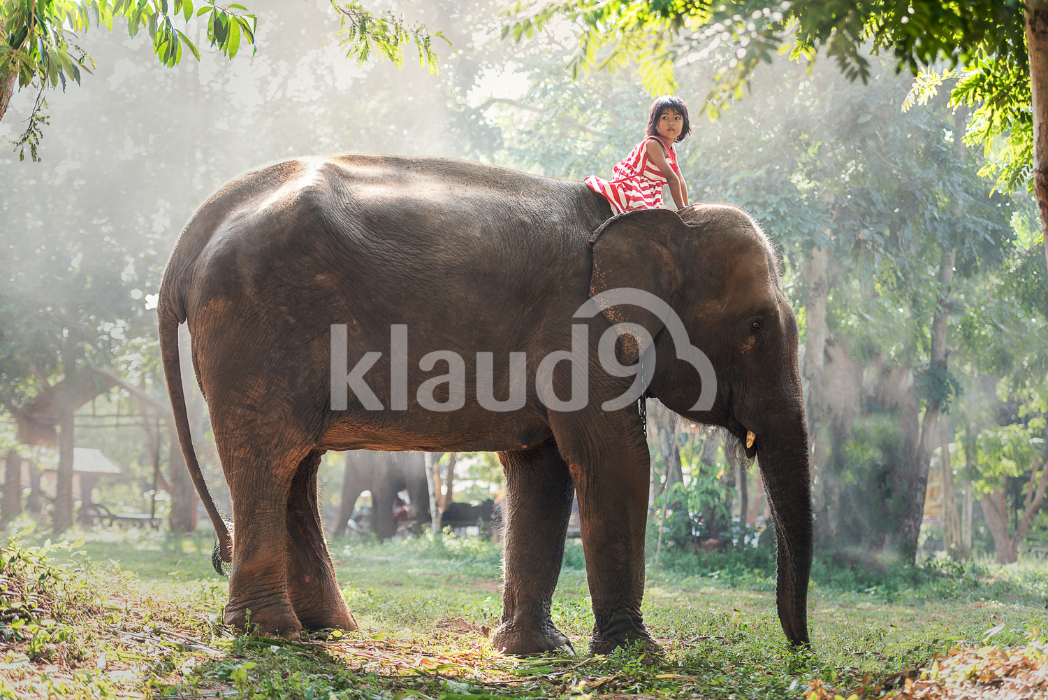 Young girl riding on elephant