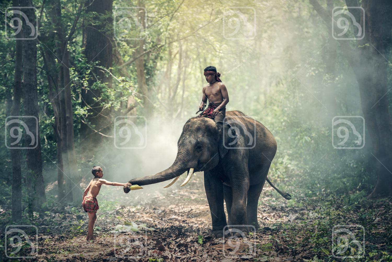 Little Asian boy feeding elephant
