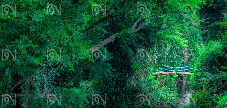 Bridge on the Jungle