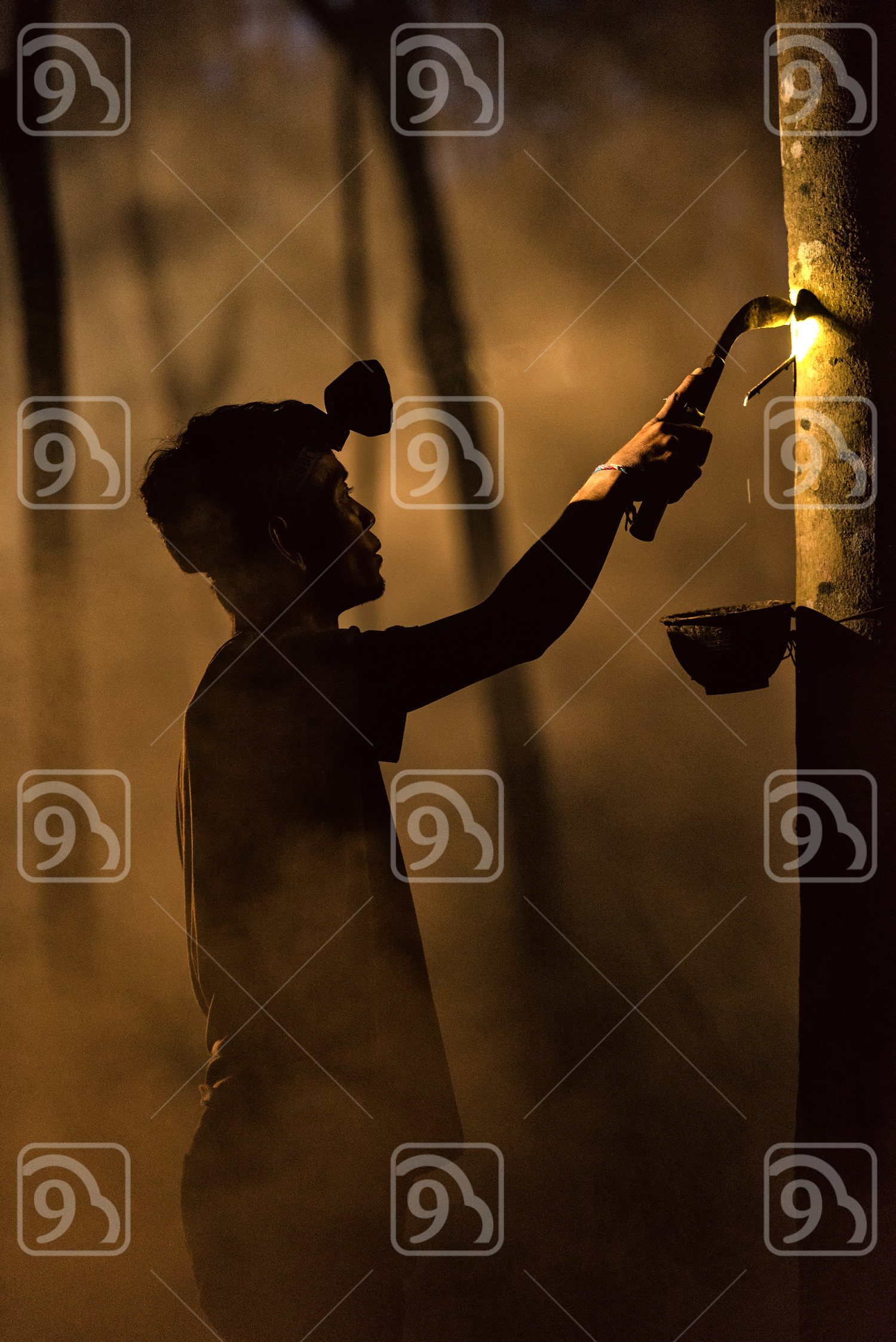 Man Tapping Rubber Tree at Night
