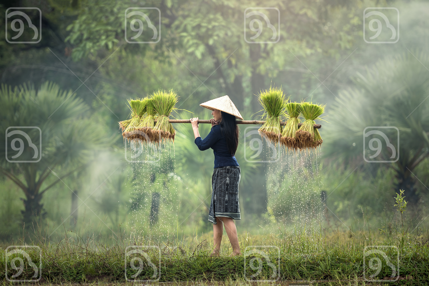 Woman Farmers grow rice in the rainy season