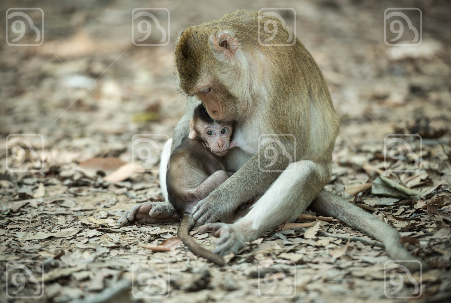 Monkey eating milk from the mother