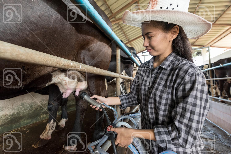 Female worker in milking parlor