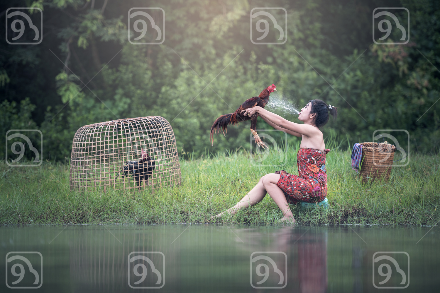 Thai local woman, cock fighting