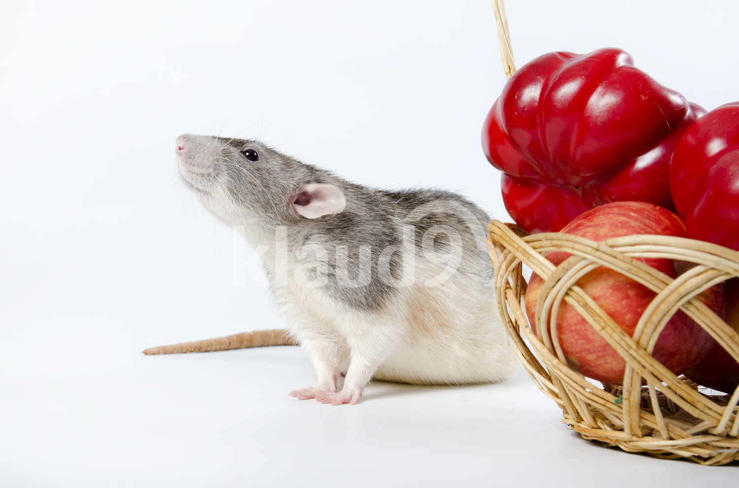 Rat and wicker Basket