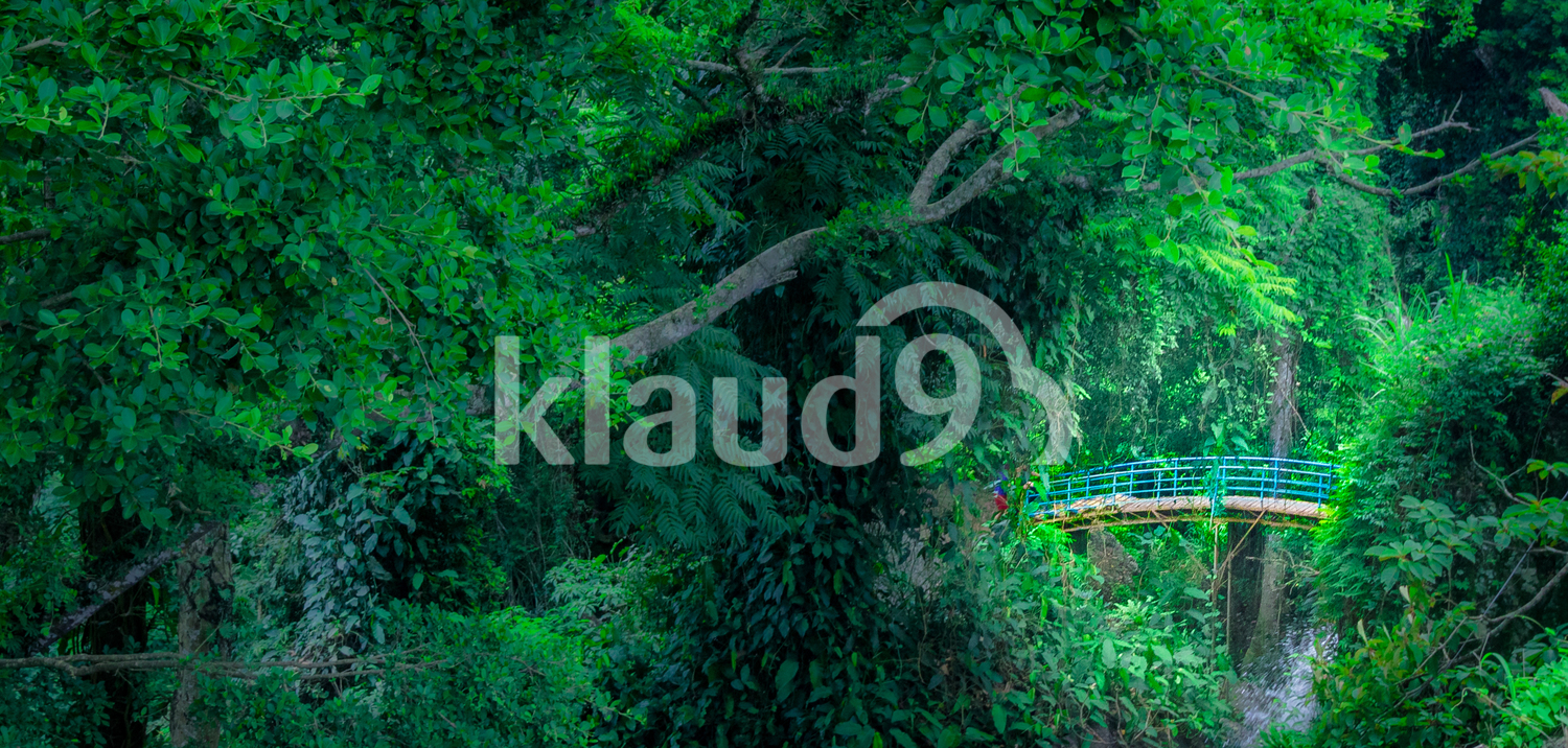 Bridge on the Jungle