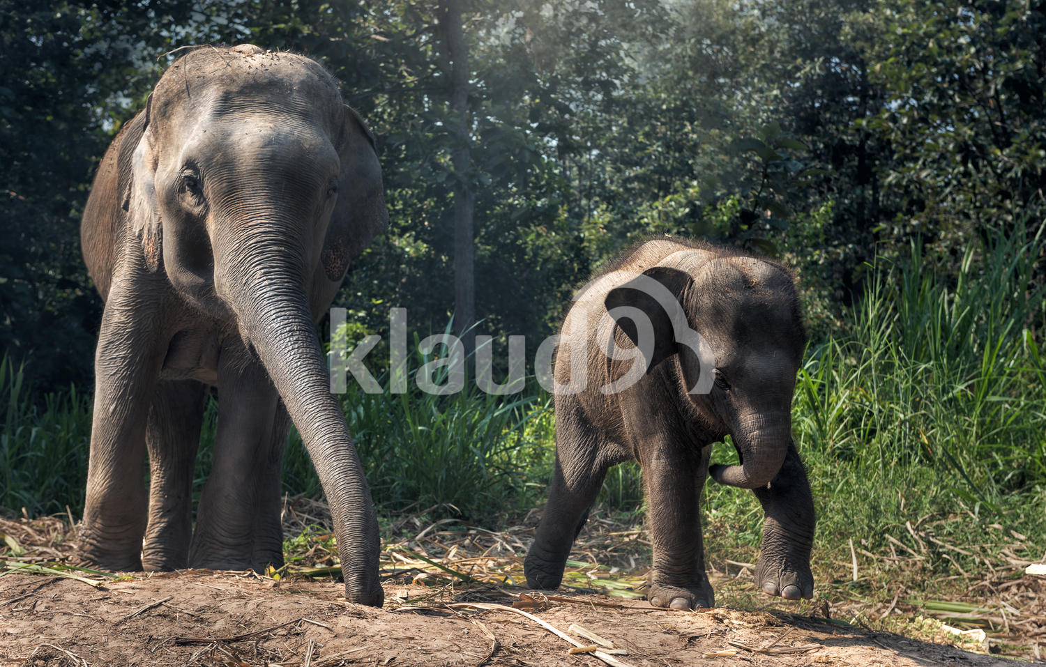 Mother elephant with young elephant