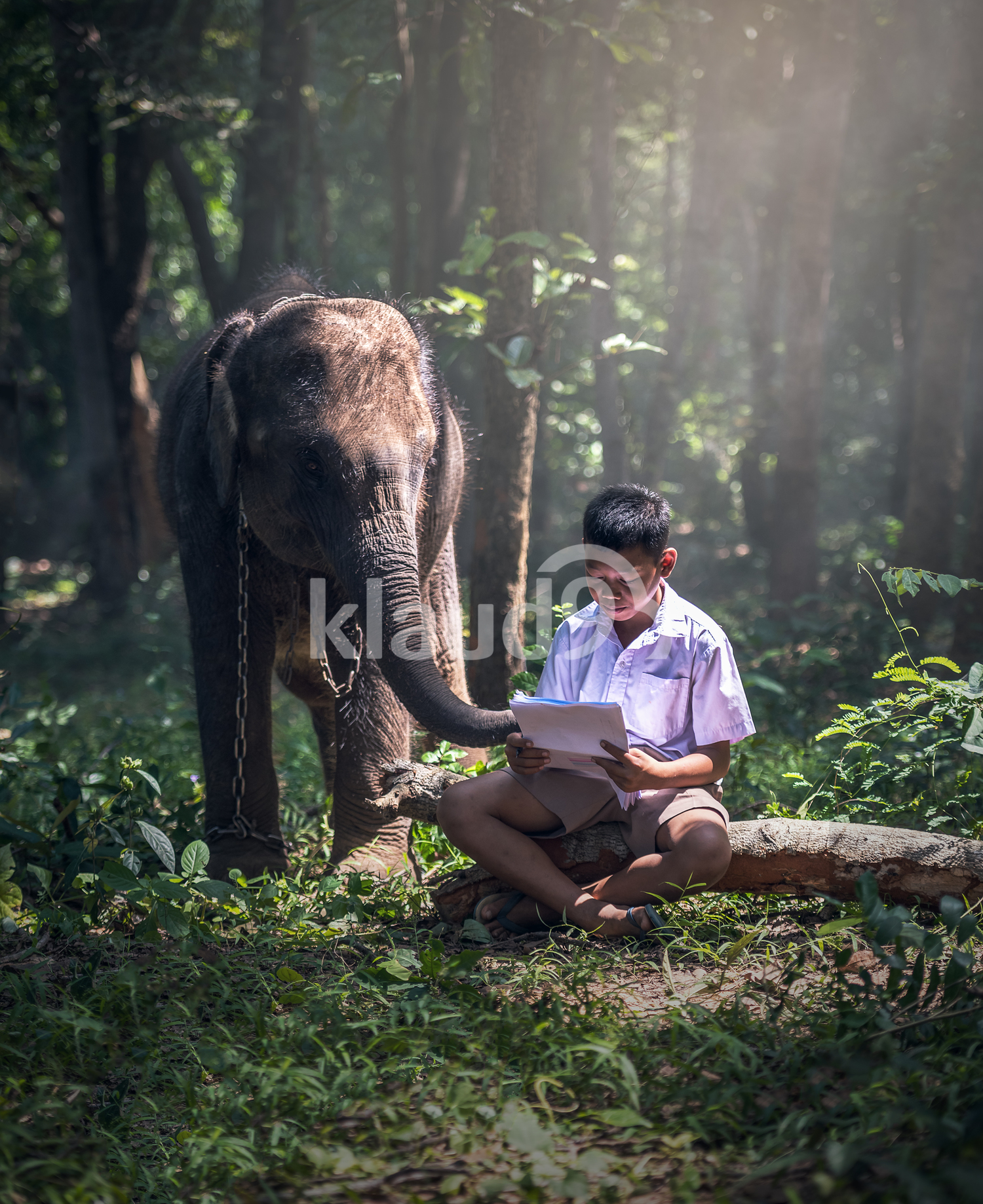 Student little Asian boy with him elephant