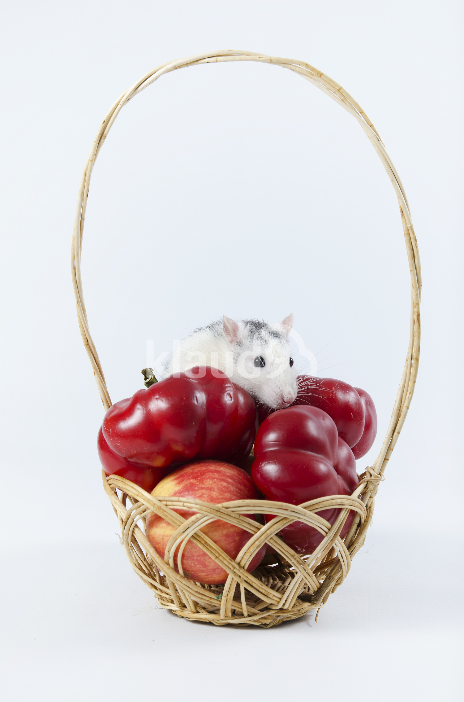 Cute Rat on Wicker basket