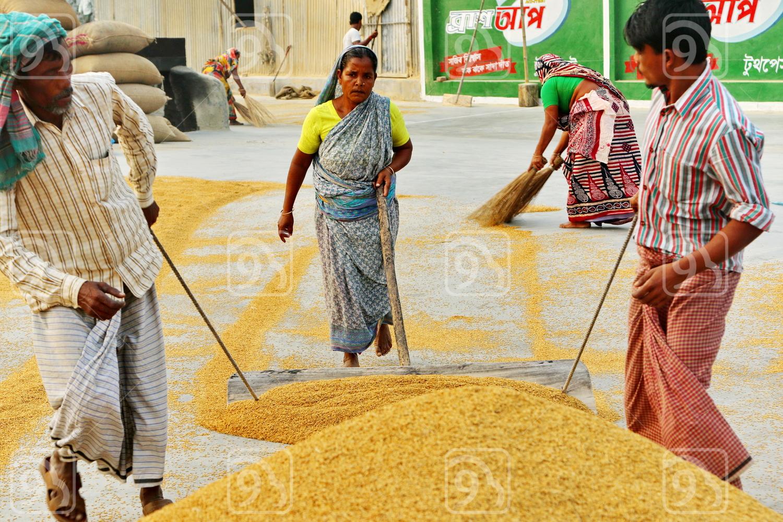 Rural Life in Dhaka