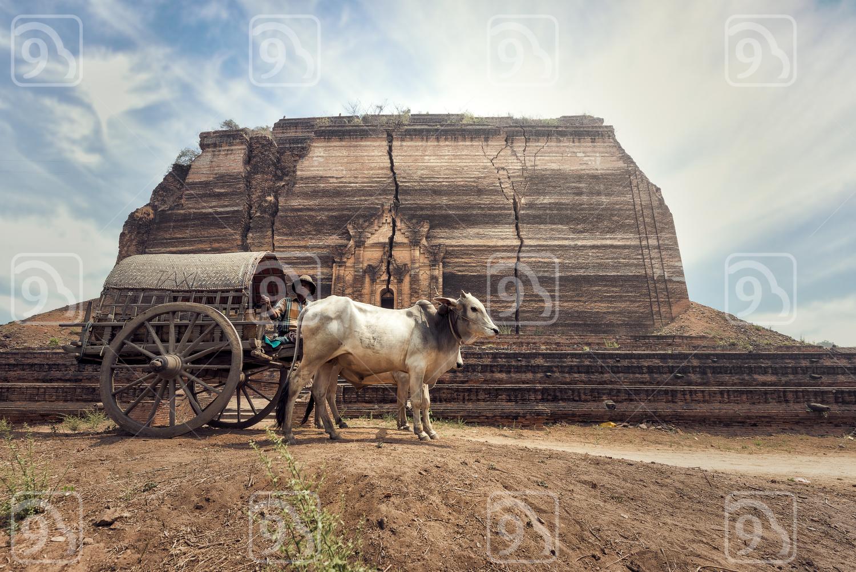 Burmese rural man driving wooden cart
