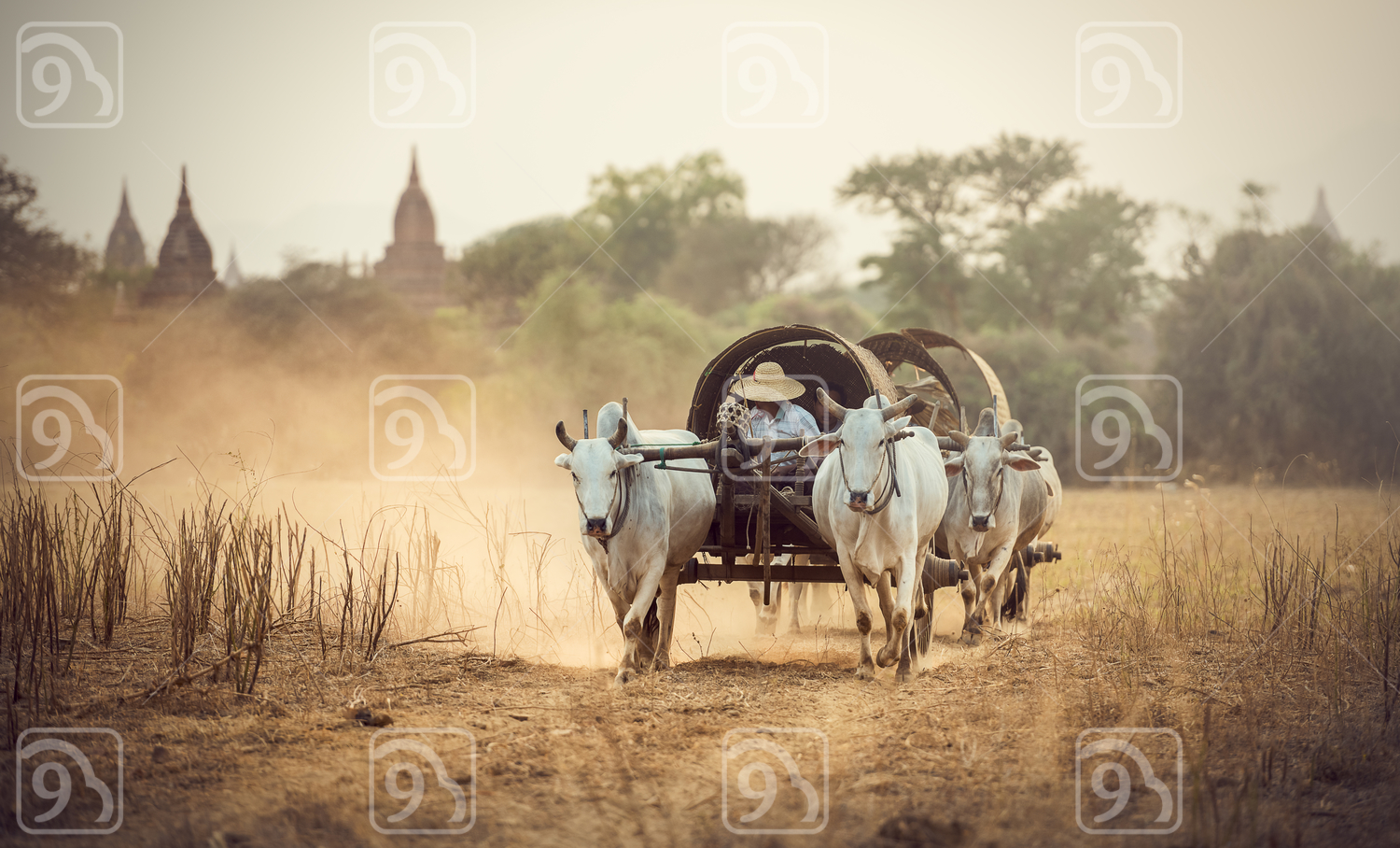 Burmese rural man driving wooden cart