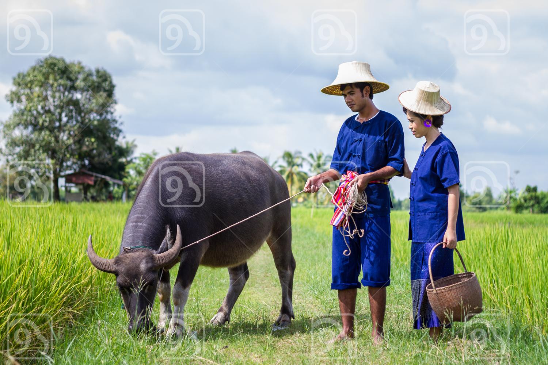 Thai Farmer couple in the rice fields