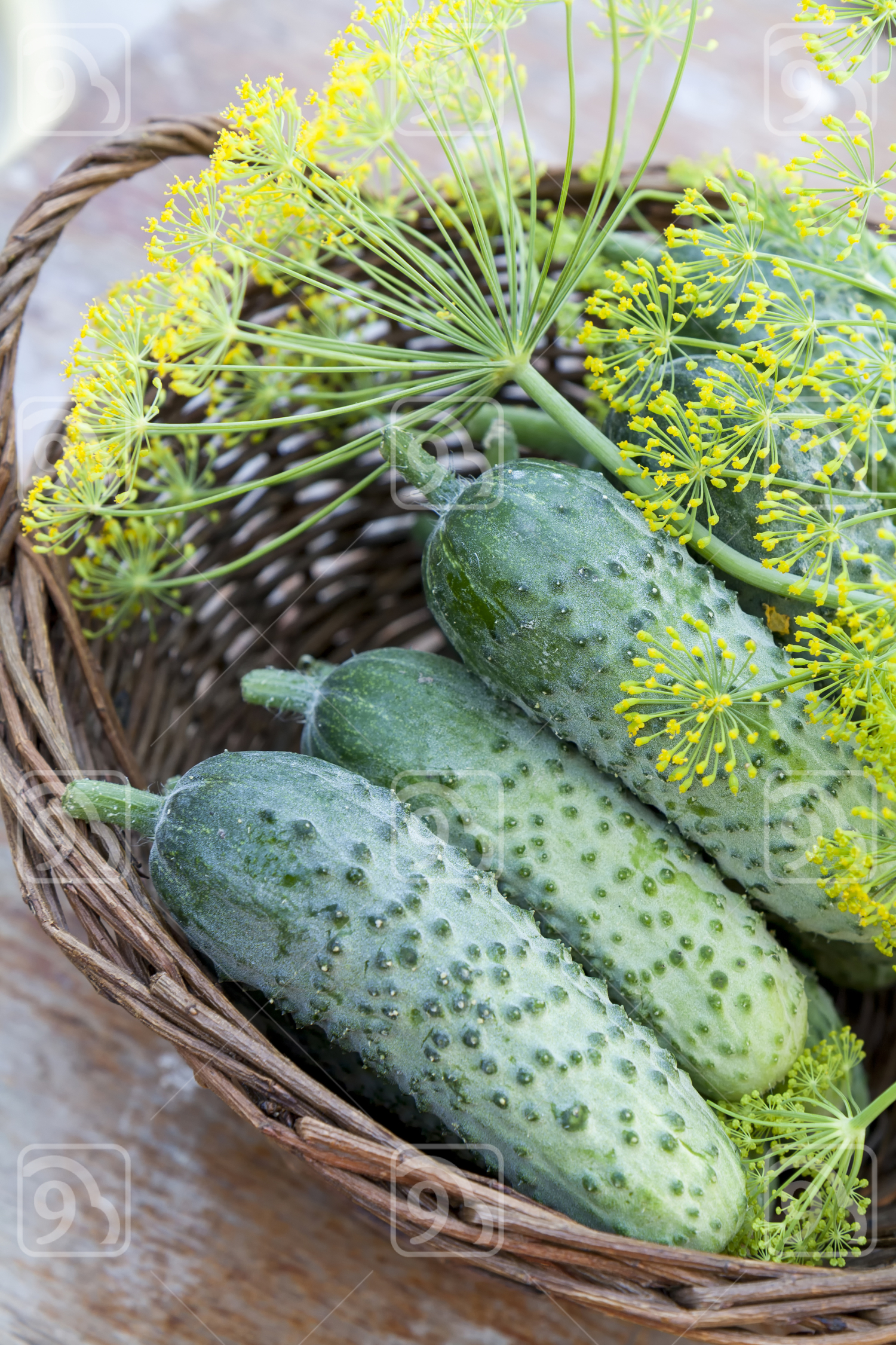 Fresh cucumbers in wicker basket with dill