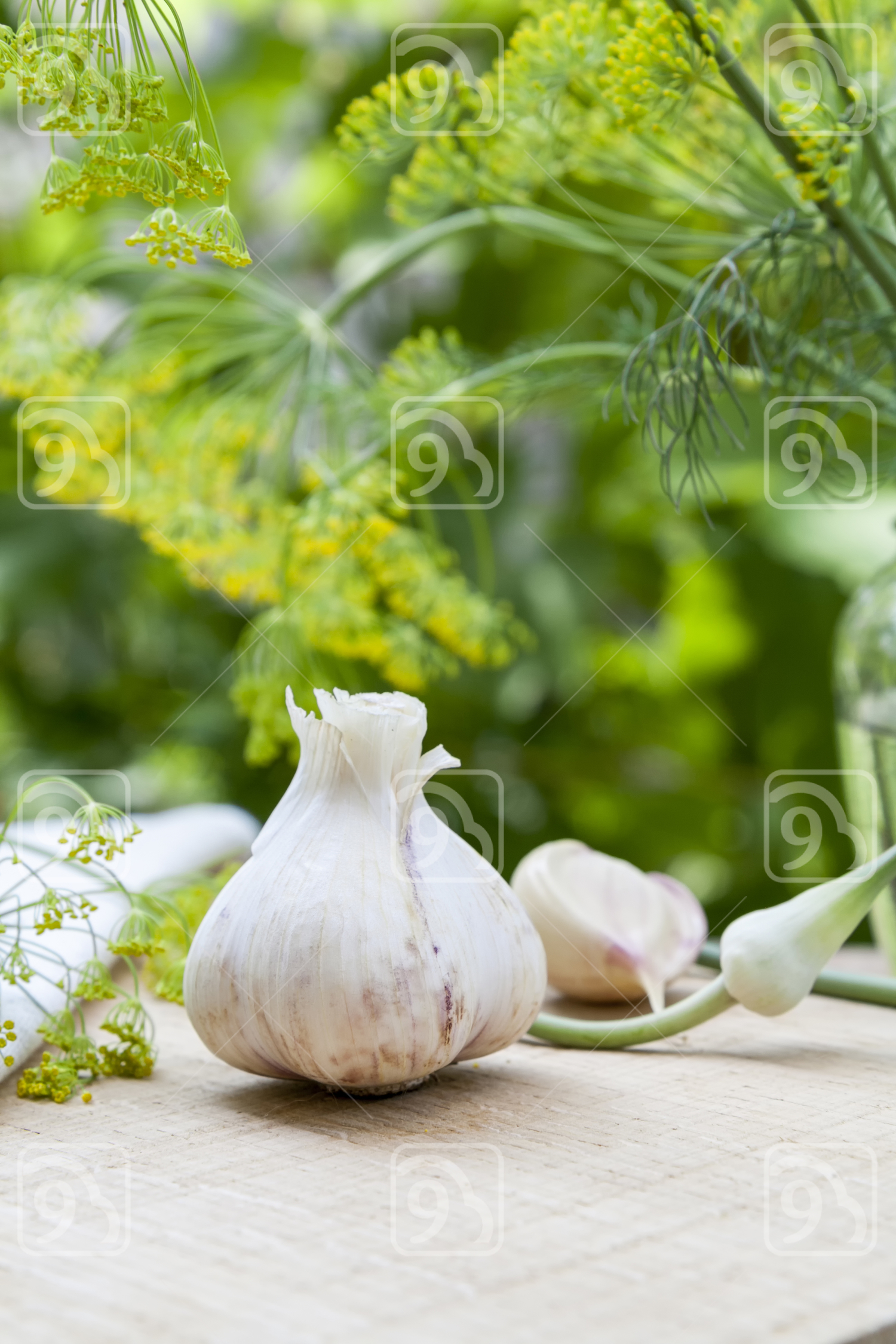 Fresh garlic and dill on a wooden table