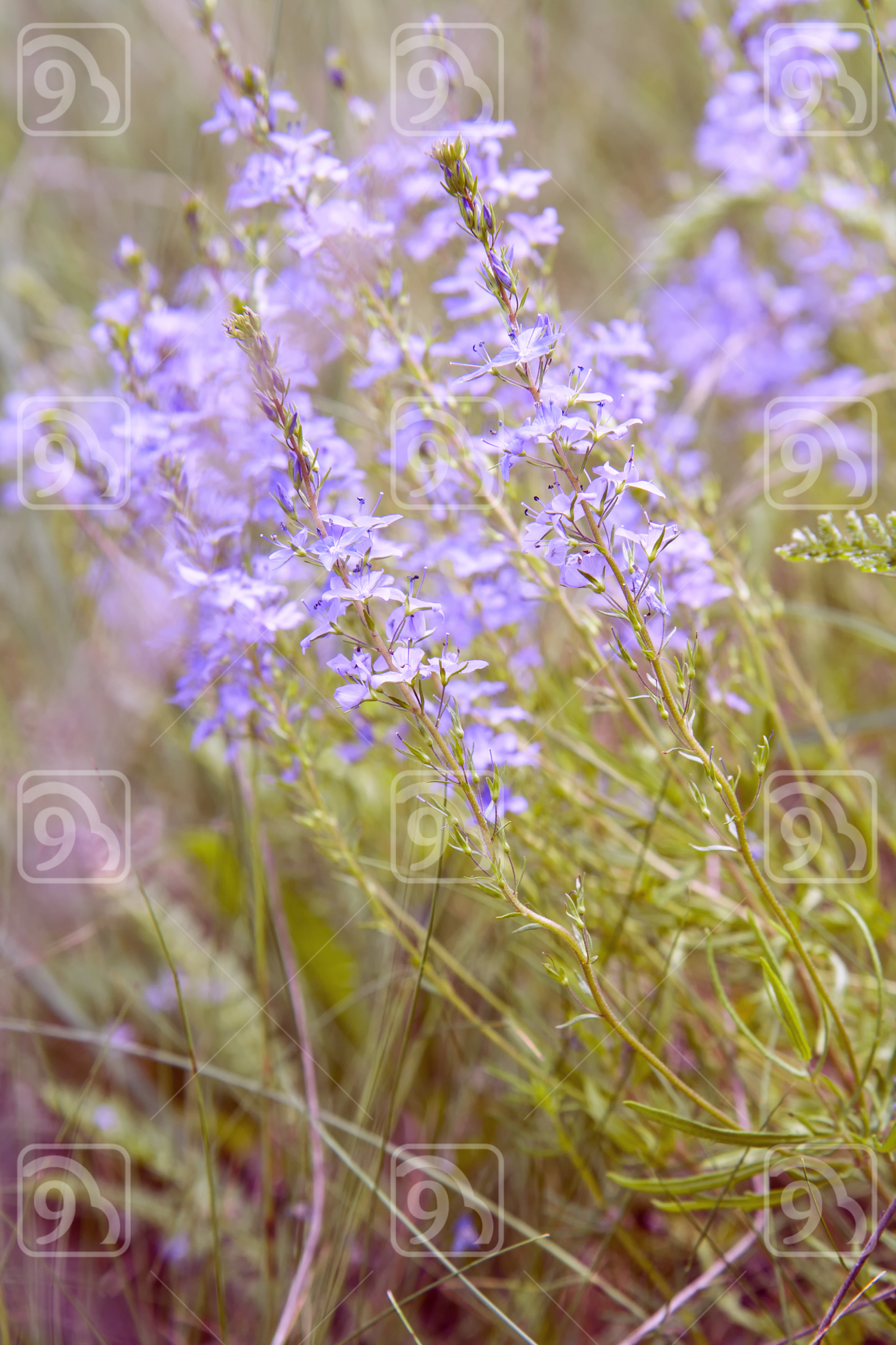 Nature spring summer flowers field sunny background