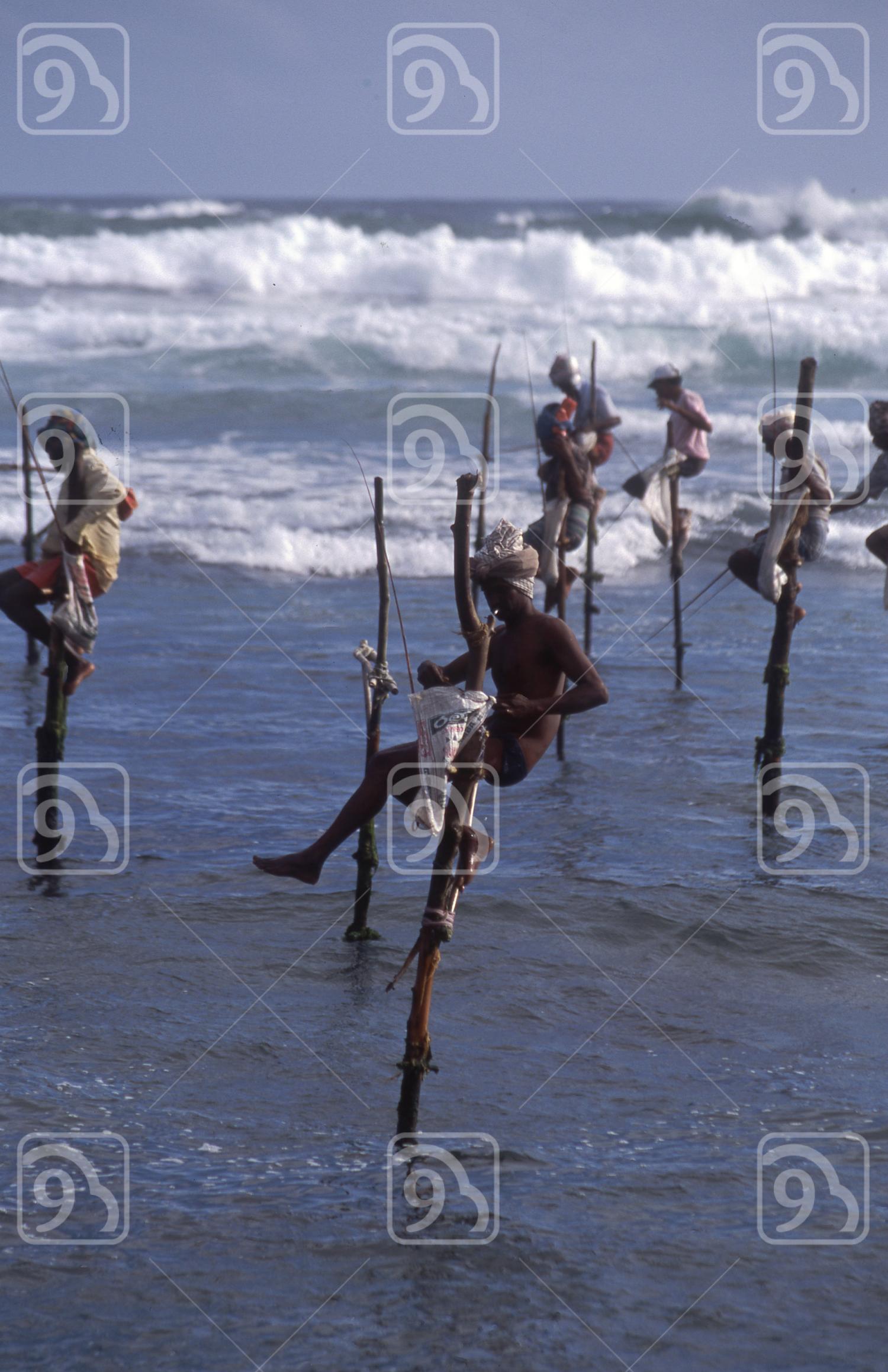 Stilt fishermen in Sri Lanka