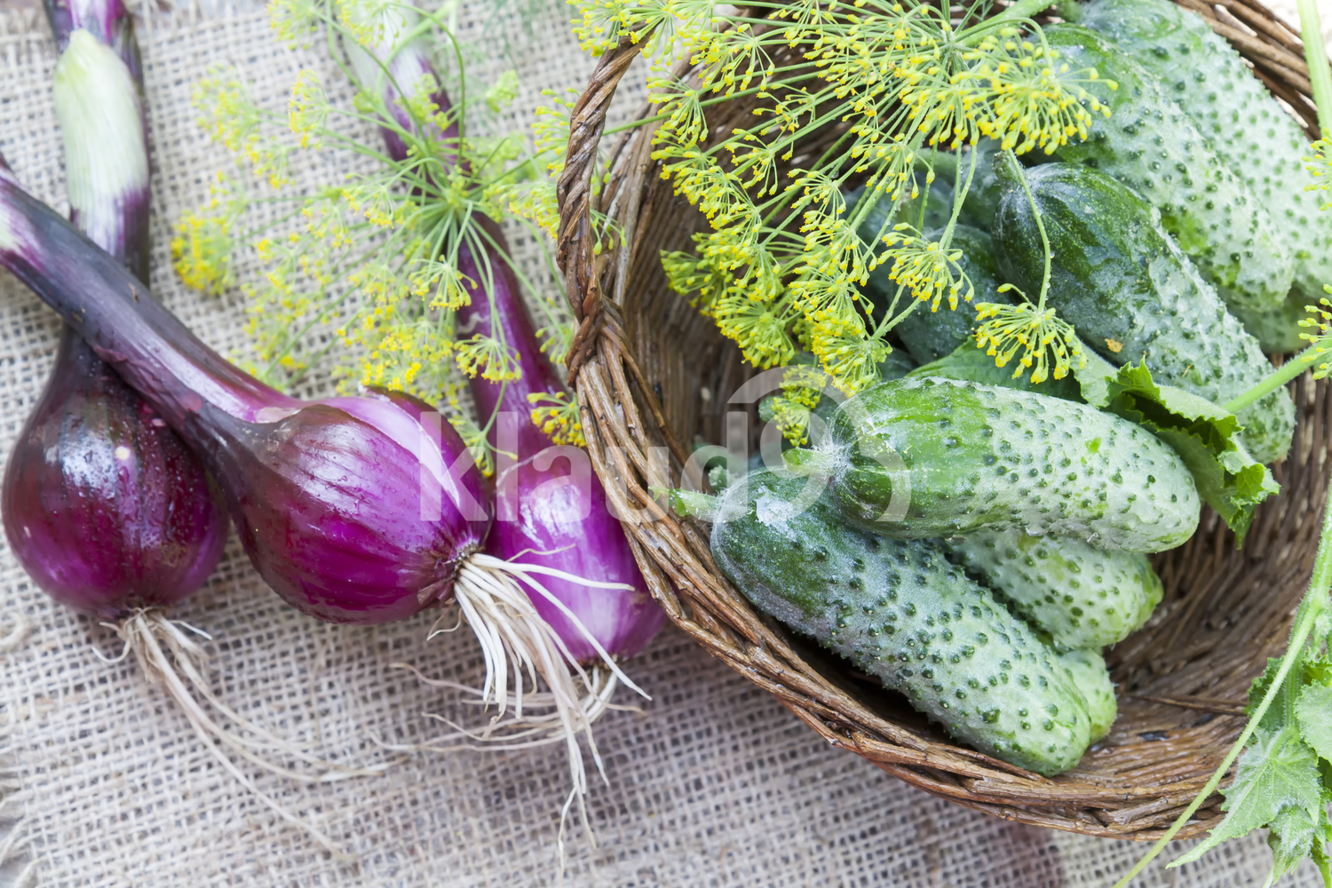 Fresh cucumbers in wicker basket with dill and onion