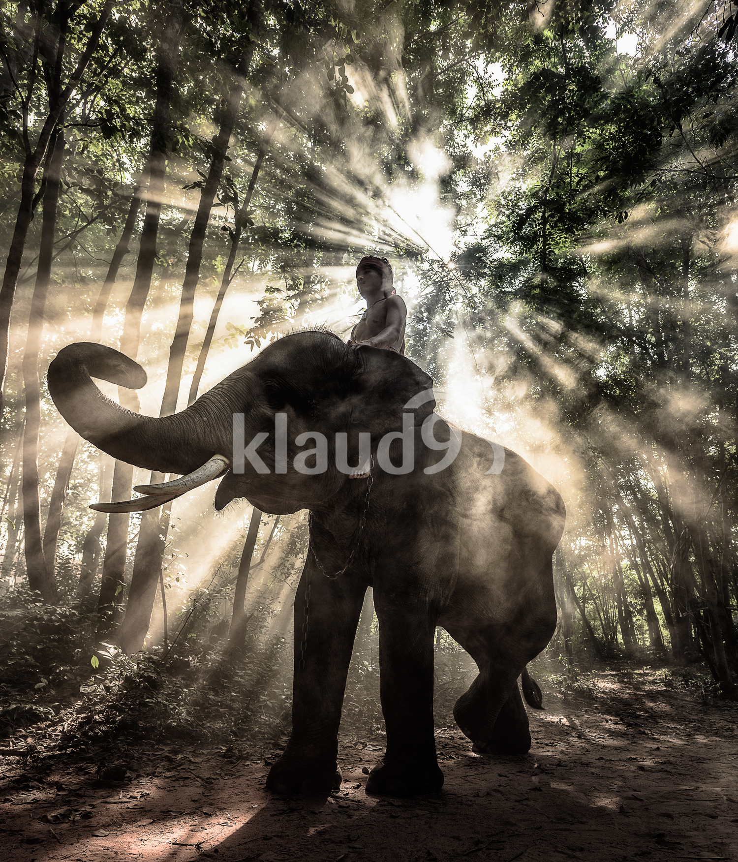Silhouette of elephant trekking through forest covered in rays of light