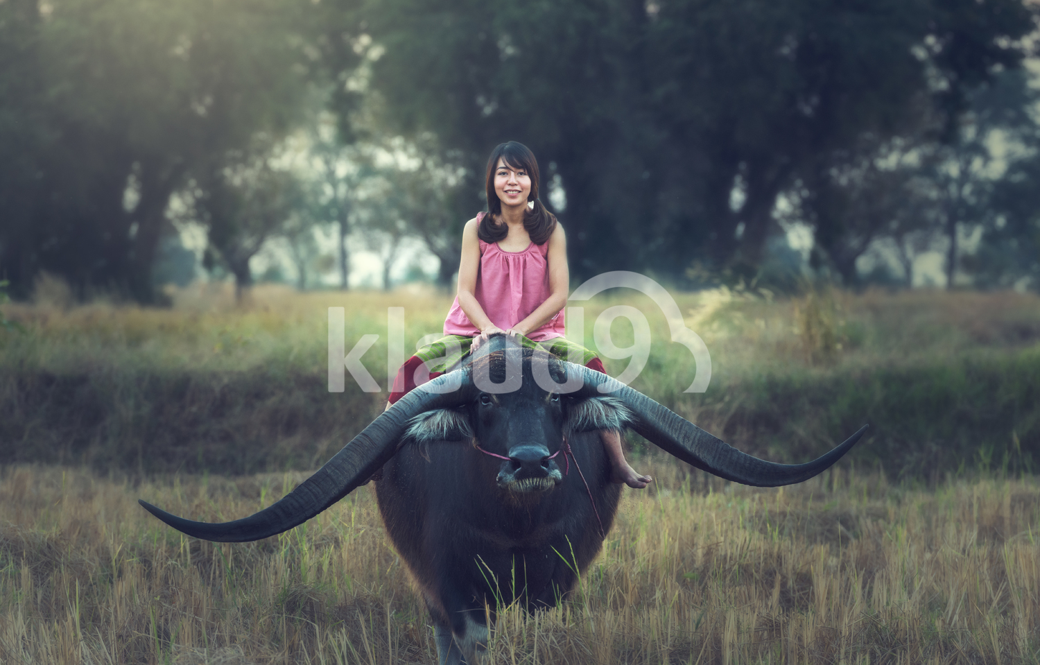 Asian woman (Thai) farmer with a buffalo