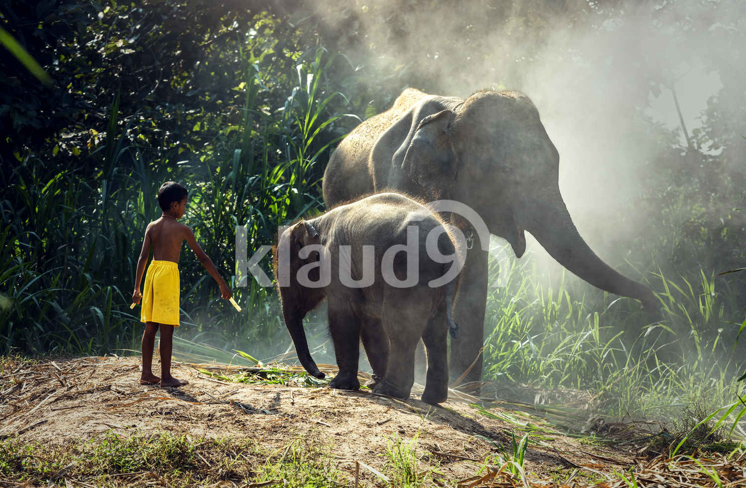 Elephant with child in the forest