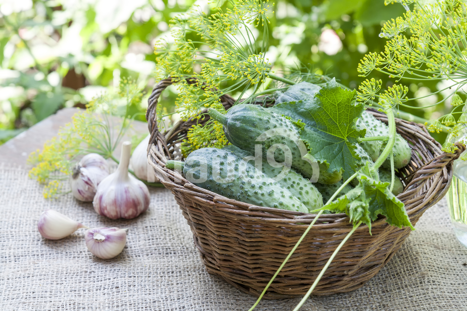 Fresh cucumbers in wicker basket with dill and garlic