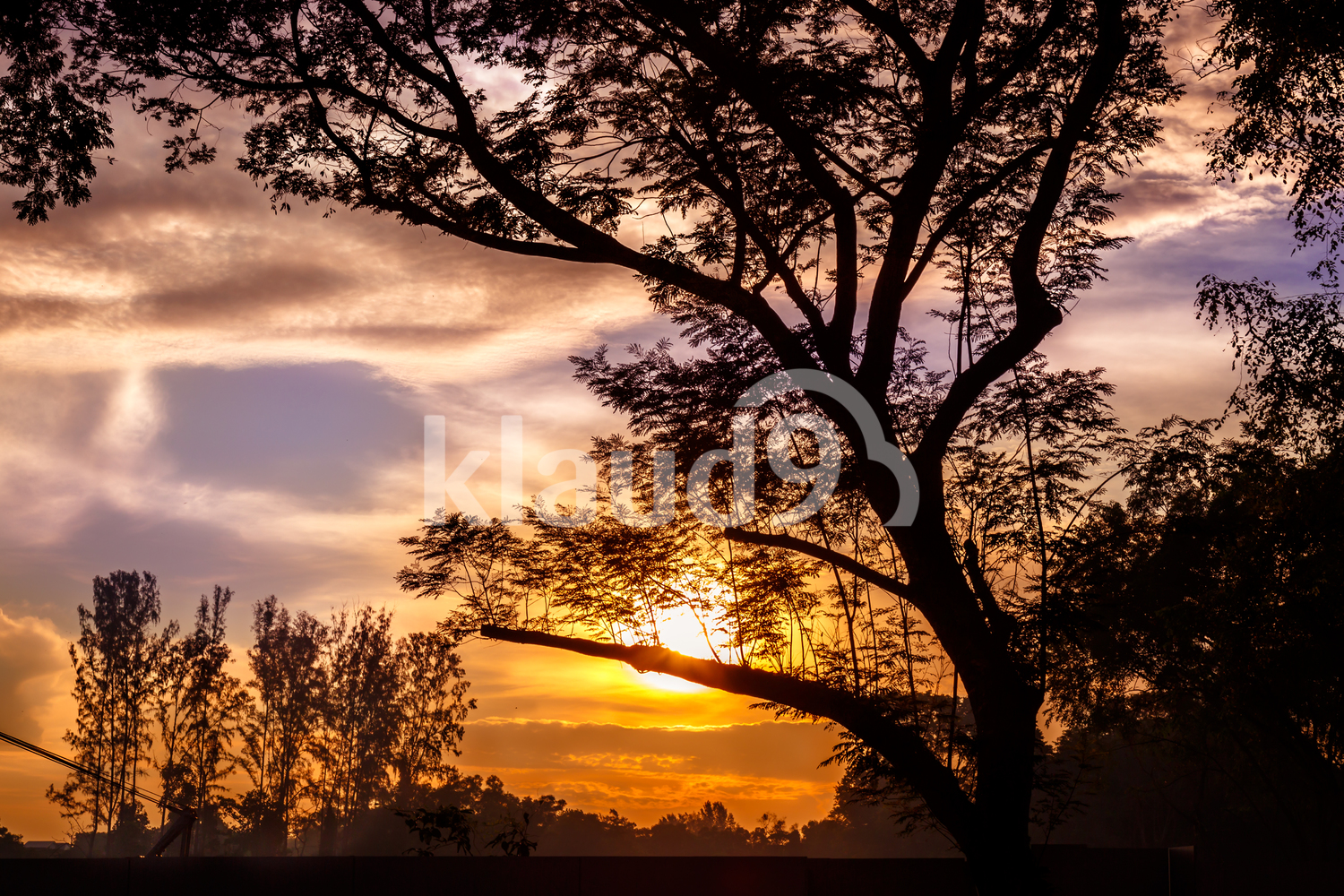 Sunrise silhouette of trees